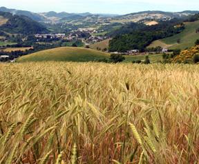 agricoltura-biologica-in-italia-campo